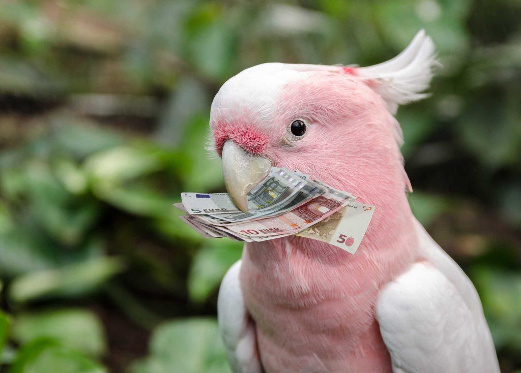 Perroquet argent