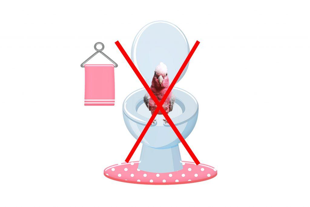 perroquet toilettes