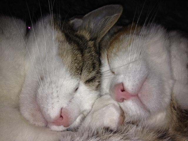 Ping et Pong chats de gouttière