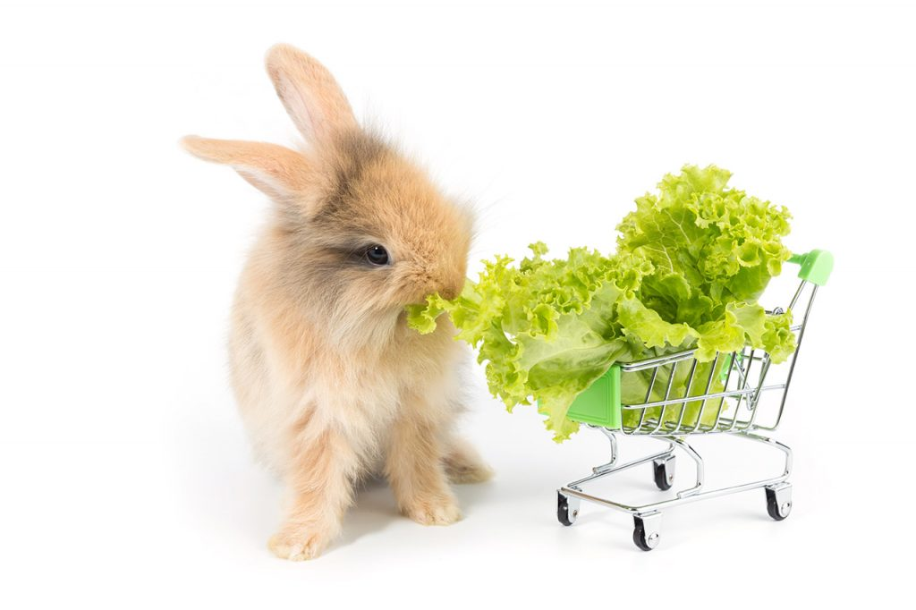 légumes lapin
